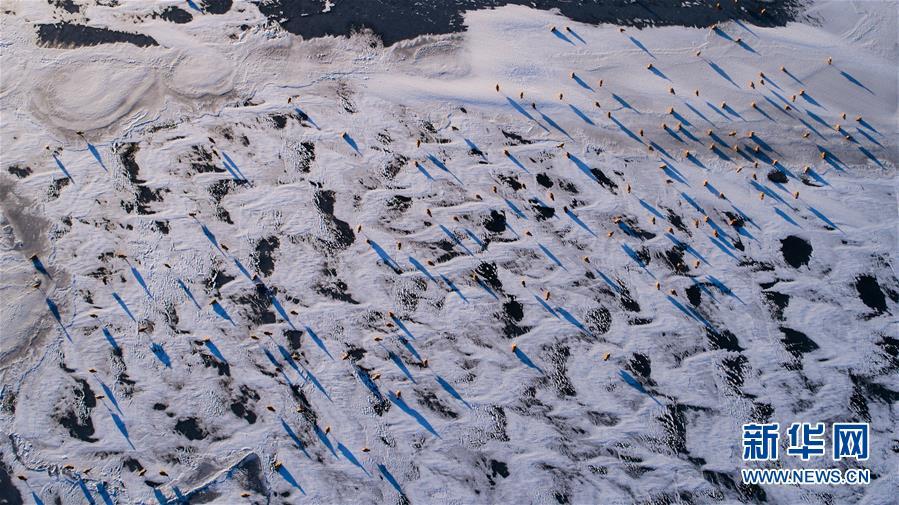 12月31日,一群赤麻鸭在青海湖结冰的湖面上(无人机拍摄)。新华社记者 吴刚