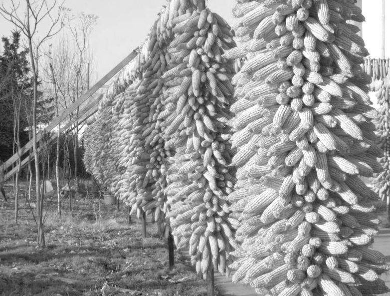 """期市创新为农业成长""""加""""上双保障"""
