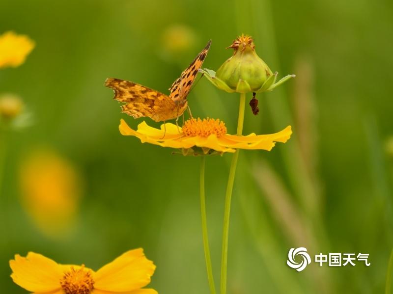 加拿大时时彩湖南衡阳:蒸水河畔蜂飞蝶舞