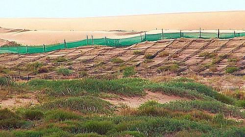 高沙障和防沙网格将沙害阻挡在铁道线百米之外。