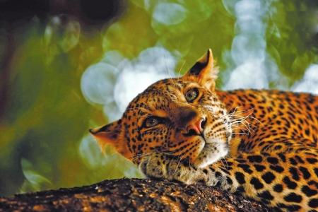 暑假到成博观野生动物摄影展 在光影世界中寻找神奇动物