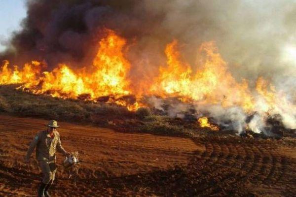 全球最大湿地火灾频发 巴西多地宣布进入紧急状态