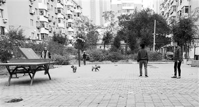 加强管理宣传 明确禁止宠物进入的公共场所