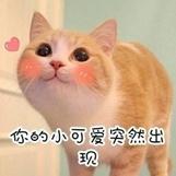 """""""春节,我回村了,把猫送去469元一晚的总统套房"""""""