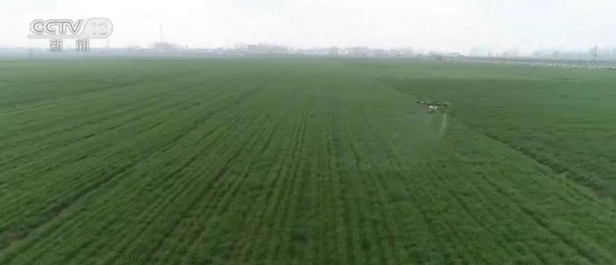 防疫情 抢农时 河南8550万亩小麦长势良好