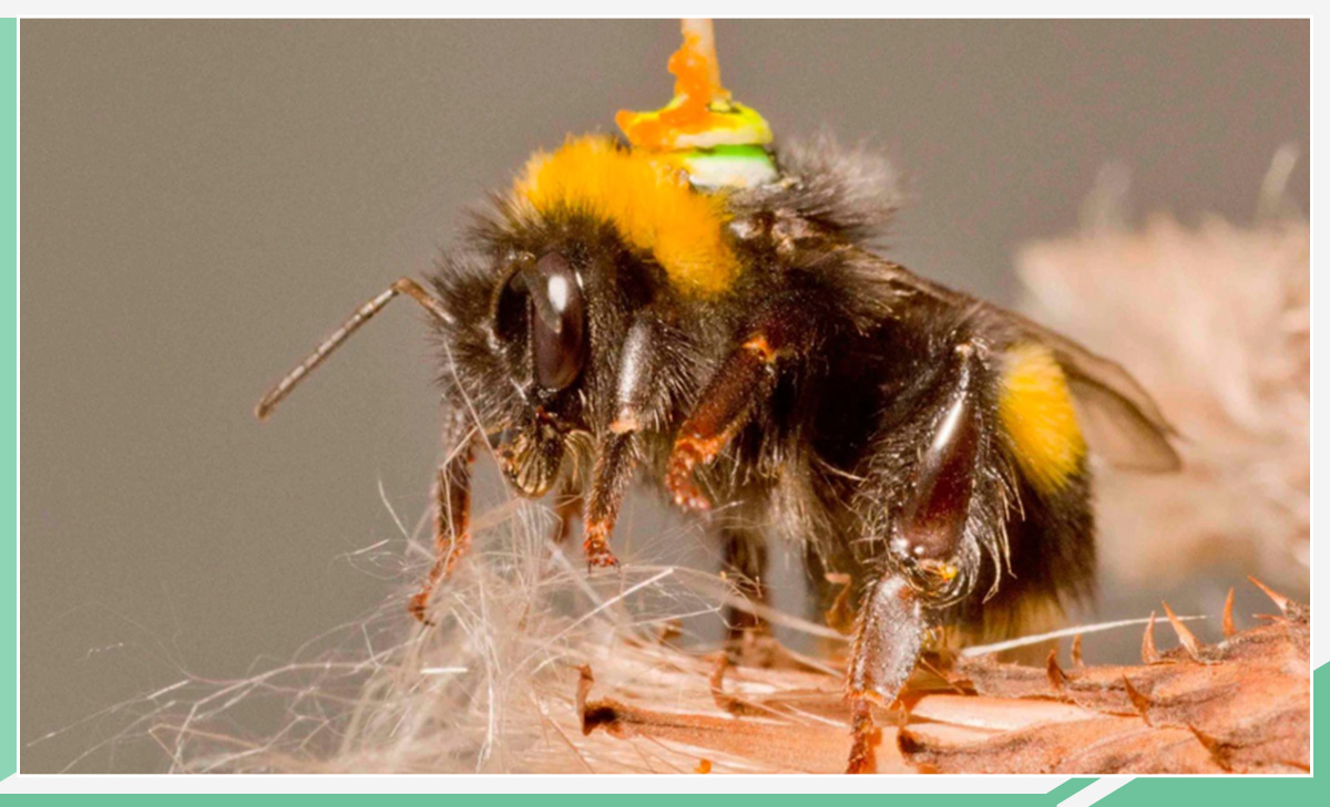 破解蜜蜂大脑密码 自动驾驶技术有望迎来飞跃