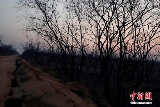 因干旱与森林火灾持续蔓延 玻利维亚进入灾难状态