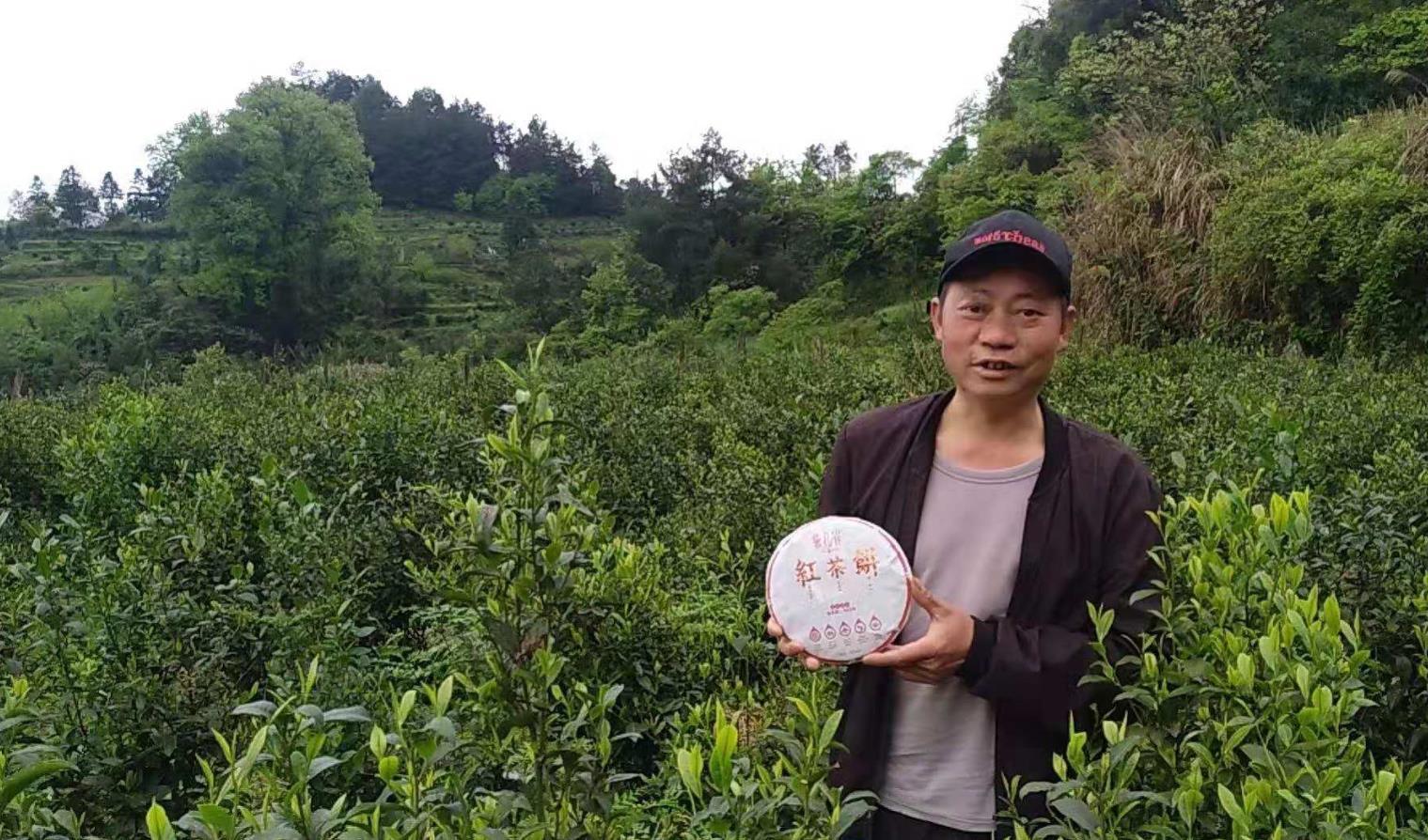 贵州石阡:散茶变茶饼,收入增三倍