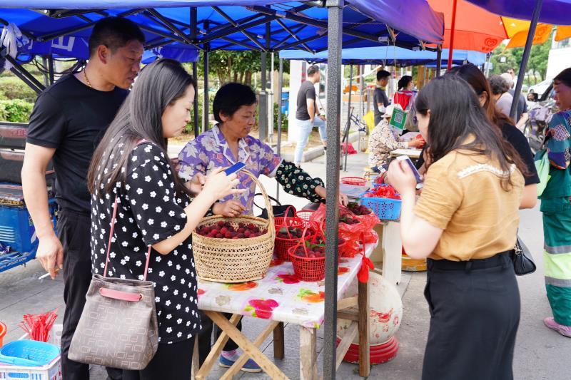 苏州树山:小杨梅释放乡村振兴大能量