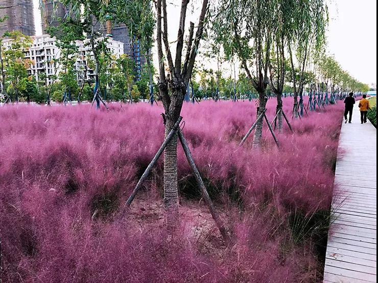 东方园林全力打造颖泉泉水湾湿地公园,为阜阳城市建设贡献力量