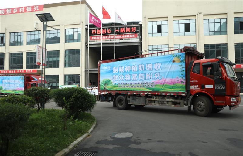 贵州省六盘水市水城区刺梨迎来大丰收 群众迎来大增收